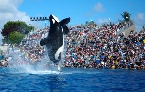 聖地亞哥-海洋世界精華一日遊 (SW)
